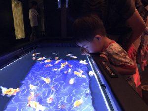 すみだ水族館の東京金魚ワンダーランド2018